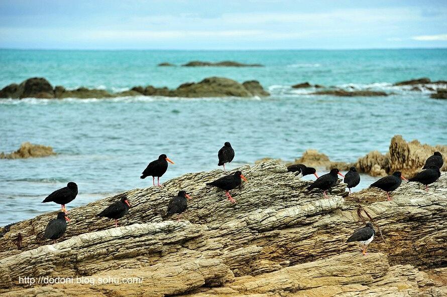 新西兰充满运动激情的凯库拉(1)