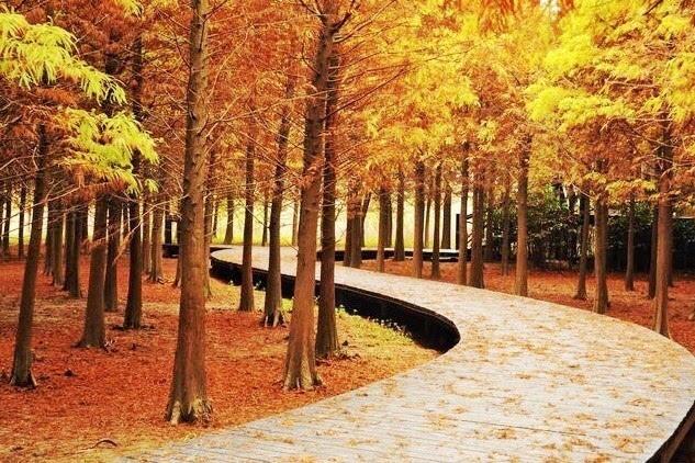 上海的离岛也藏着一处洋家乐!这里的秋天将美呆你眼球