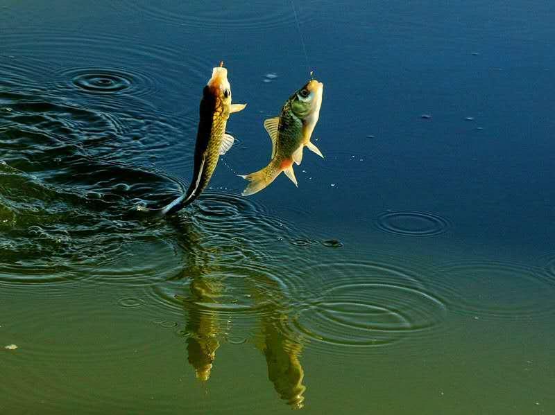 垂钓是把双刃剑 一个资深钓鱼人的感悟
