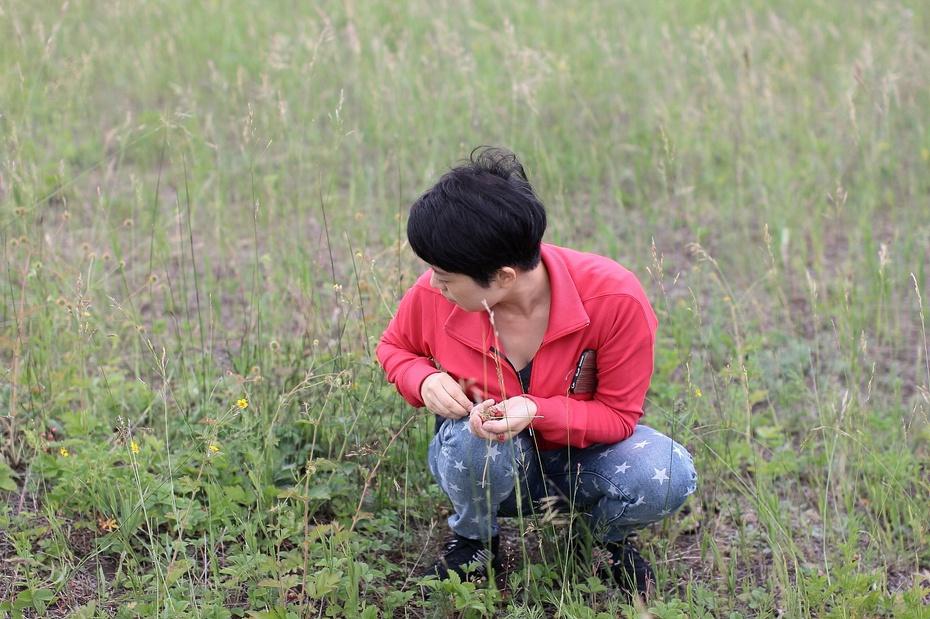 醉美贝加尔之三 草原赏花