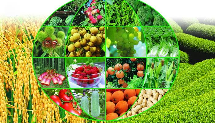 """农业农村部就""""关于加大粮油主产区扶持发展力度""""的建议做出答复"""