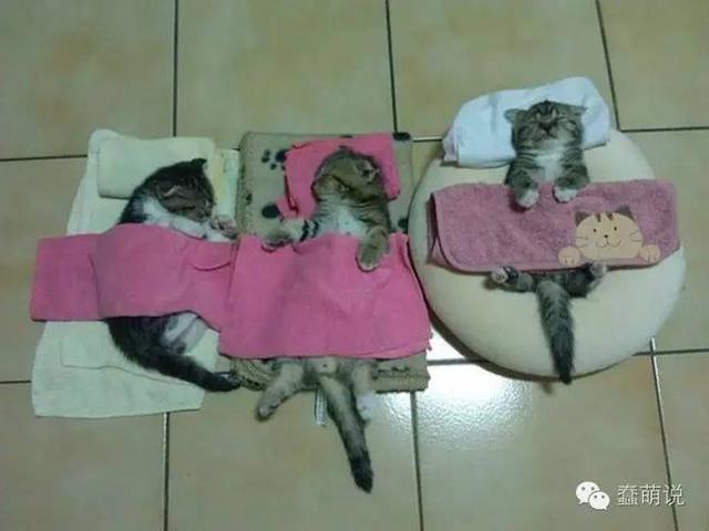 论睡姿,只服喵星人!它们是真正的艺术大师-蠢萌说