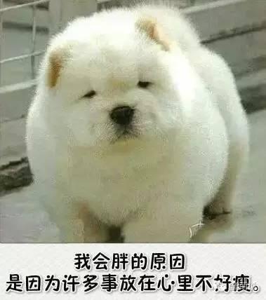 每日一蠢萌:汪星人说,我会胖是因为心里不好瘦……-蠢萌说