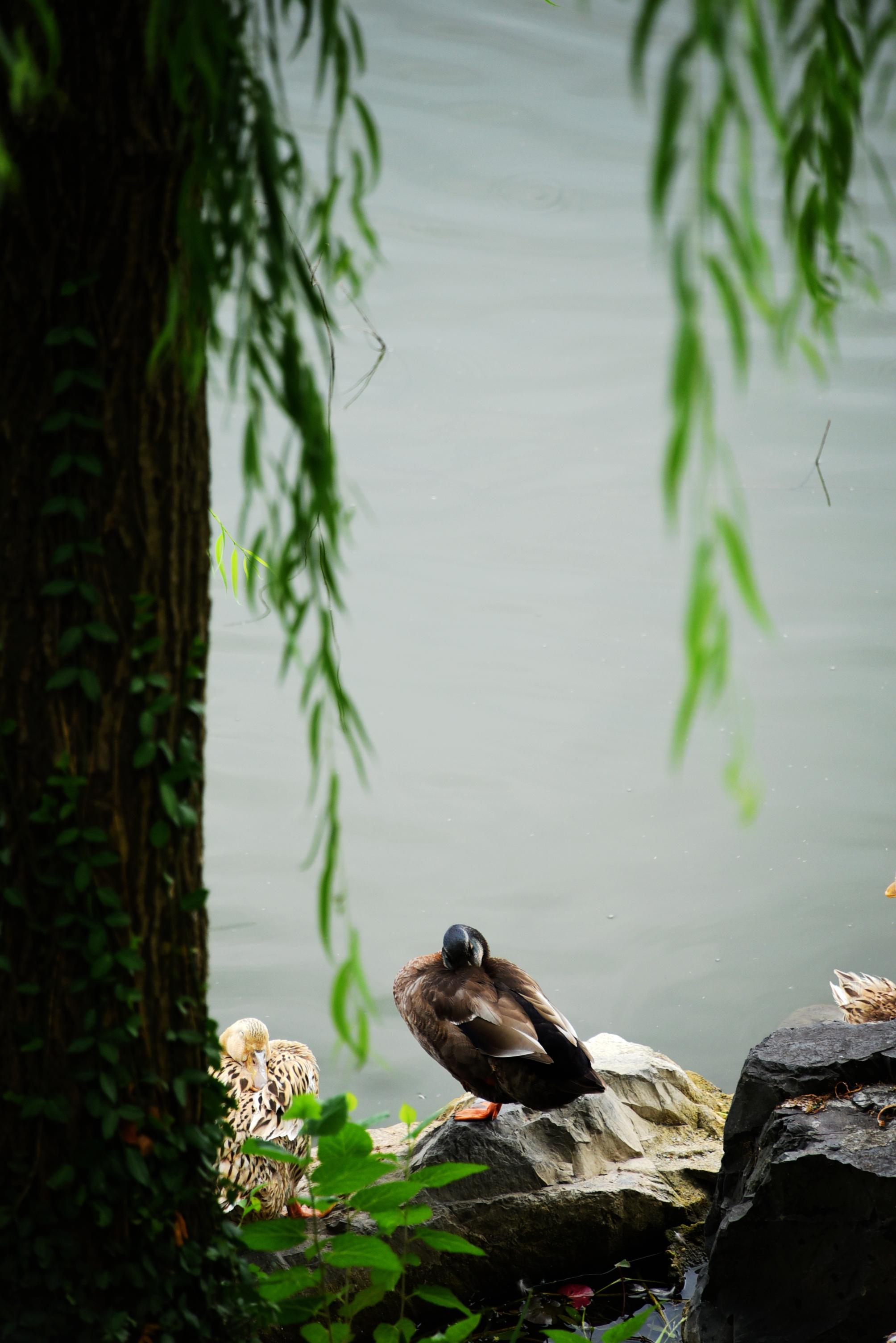 赴一场森林之约——兔子的上海崇明怡沁园之旅