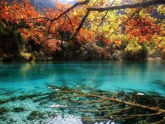 苦等一年,四川九寨沟又到一年最美的季节!