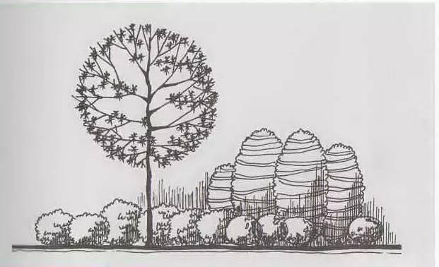 景观乔木手绘线稿