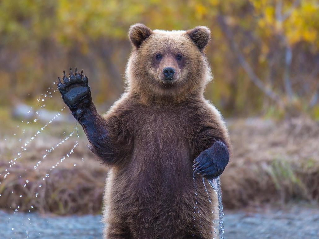 路线丨在秋季拉普兰,遇见驯鹿、棕熊与极光