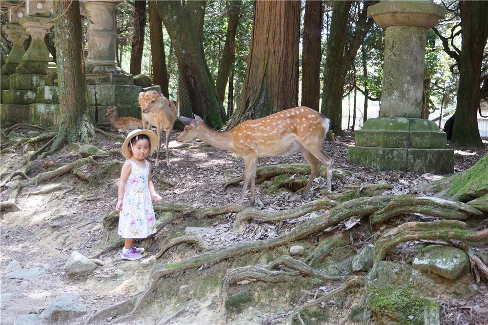 口袋娃娃暴走日本 五天走遍大阪京都奈良全攻略