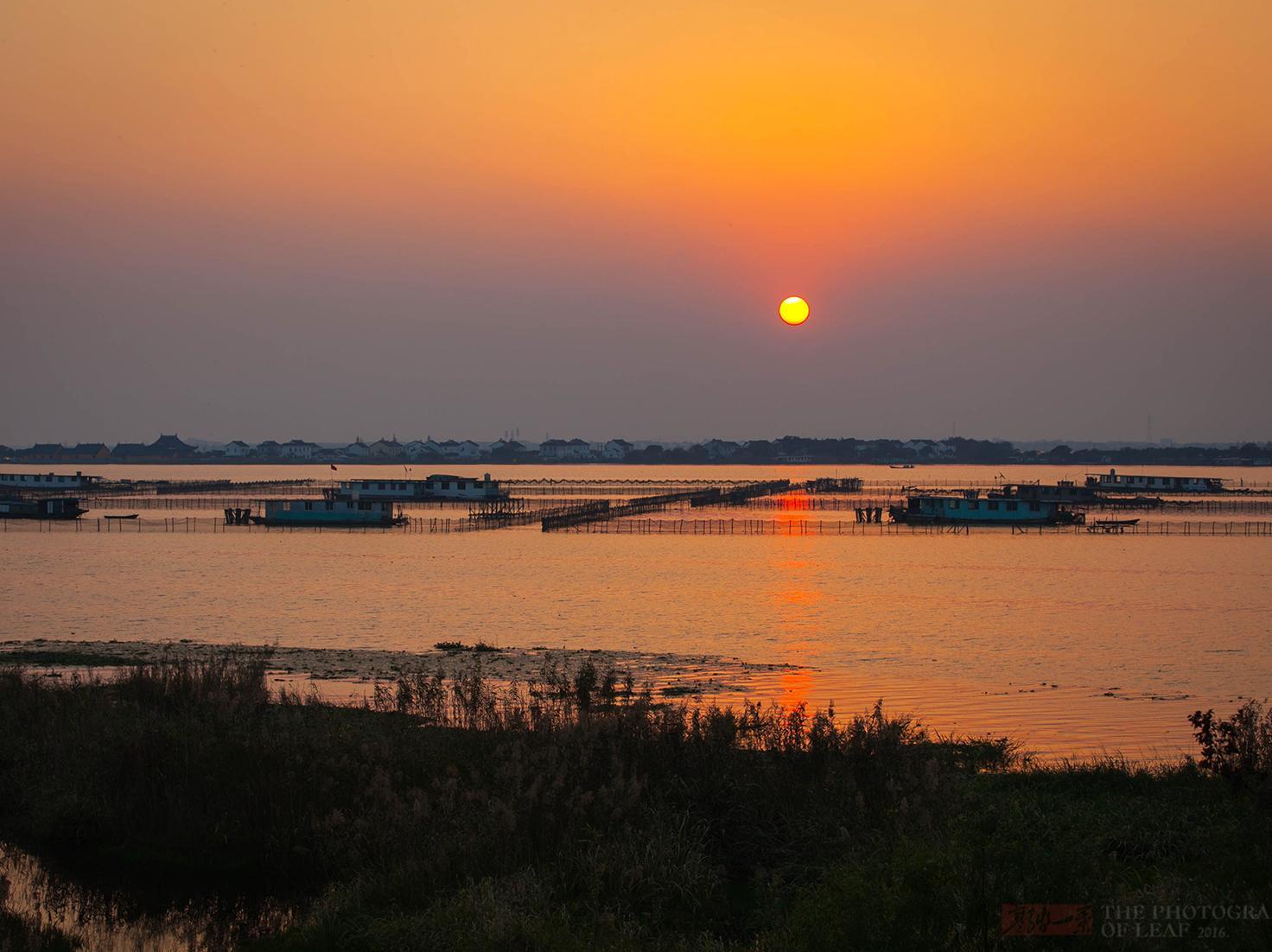 秋风起,又是一年阳澄湖最美季节