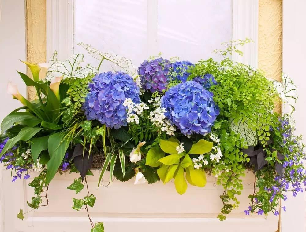 关注微信公众号:花卉与盆栽,微信号:huahuipz 返回搜
