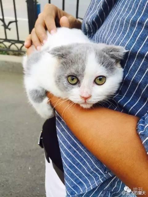 甜蜜猫手机壁纸高清