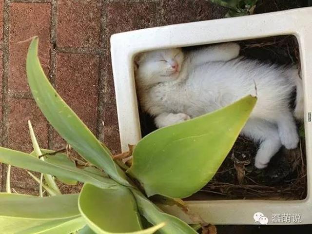 听说放一个花盆在外面,就可以收获一只猫了!-蠢萌说