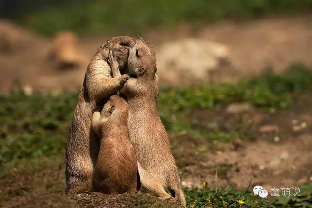 单身狗请闭眼!15组动物忘情拥吻甜蜜瞬间-蠢萌说