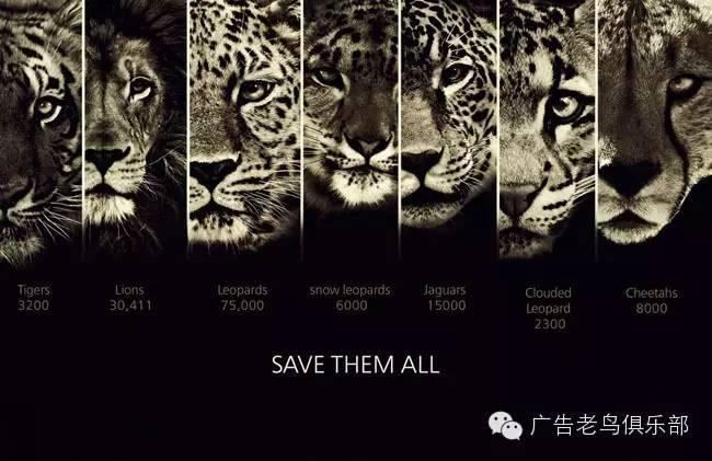 保护动物宣传公益海报创意设计欣赏图片