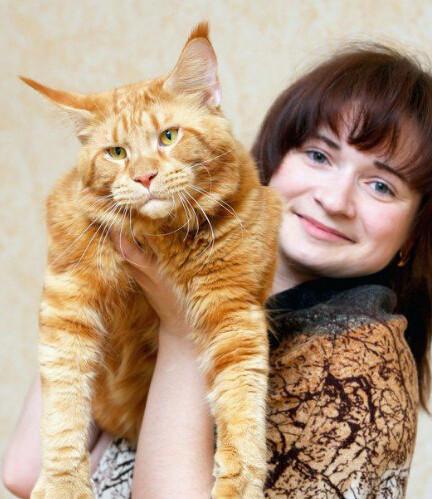 缅因库恩猫和缅因猫图片