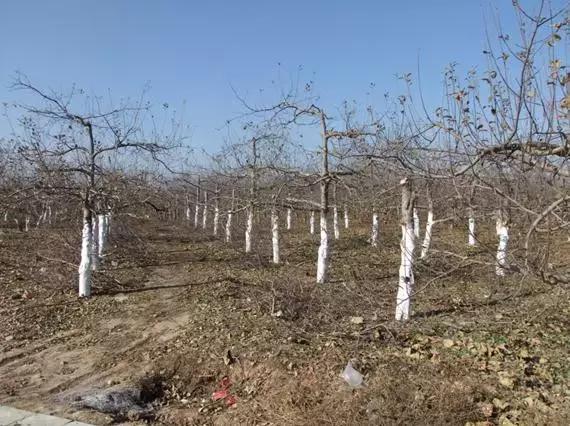 物理防治果树病虫害的图文教程!