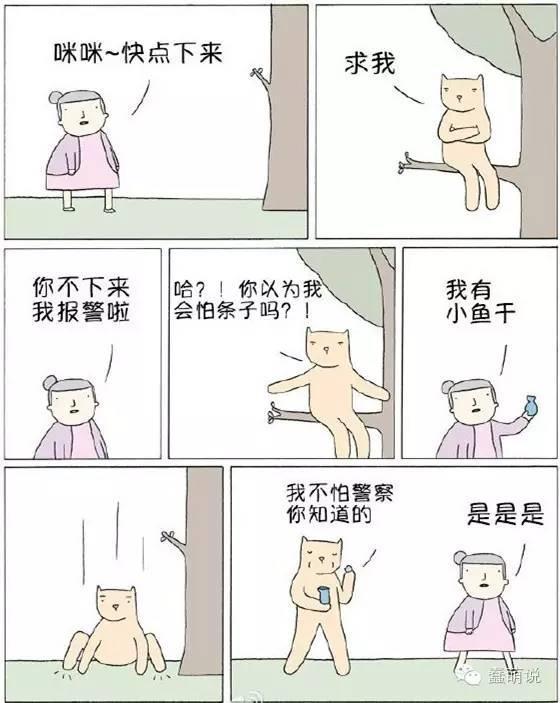 每日一蠢萌:看汪星人环游世界,哎,人不如狗啊!-蠢萌说