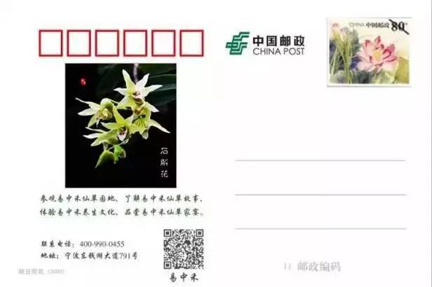 diy明信片,手工月饼,种仙草