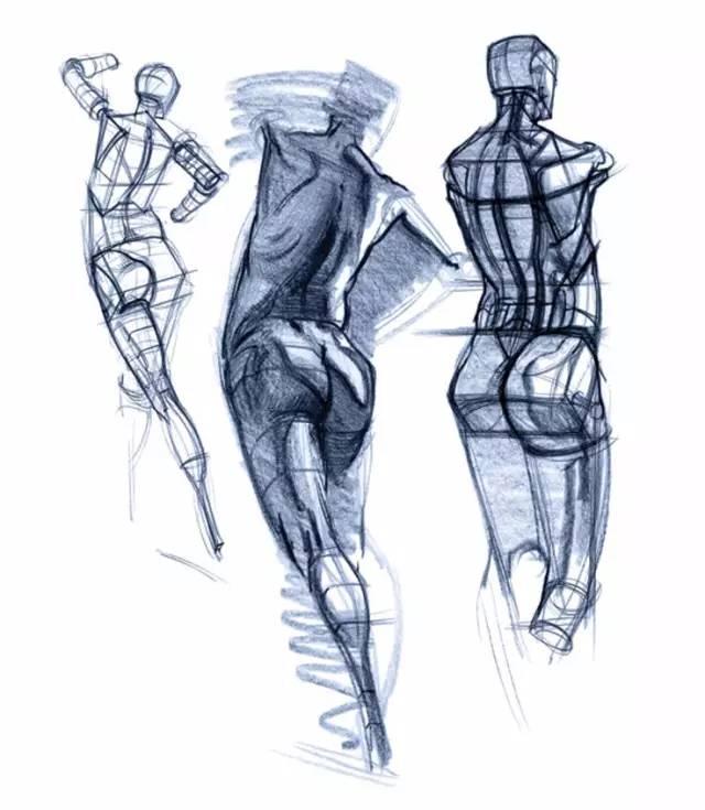 人体的肚子内部结构�_速写  关于人体结构大干货