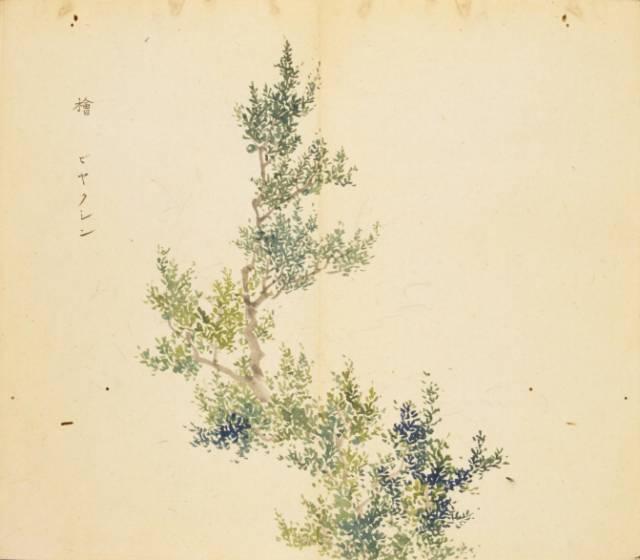 《诗经》美图100幅,温润人间草木情(珍品收藏)