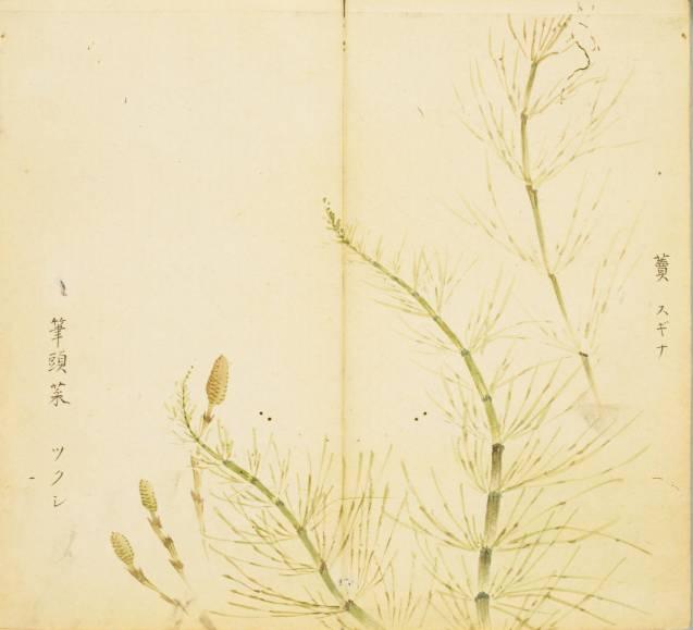 诗经 美图100幅,温润人间草木情 珍品收藏