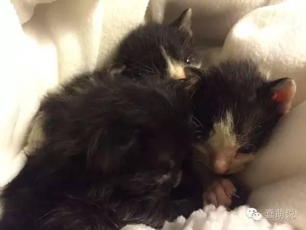 小奶猫在洪水中幸运被救,还意外收获两个狗保姆!-蠢萌说