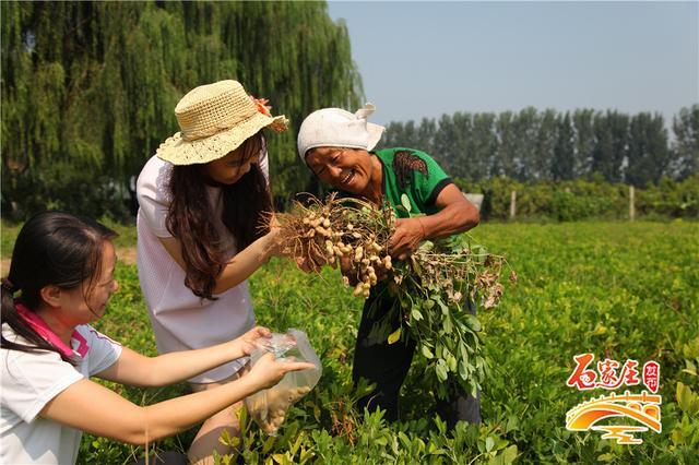 石家庄农业园唯一3a级景区晋州周家庄开启秋季采摘图片