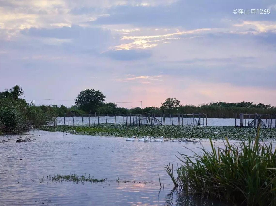 """初秋阳澄湖,坐在""""美人腿""""上看风景"""