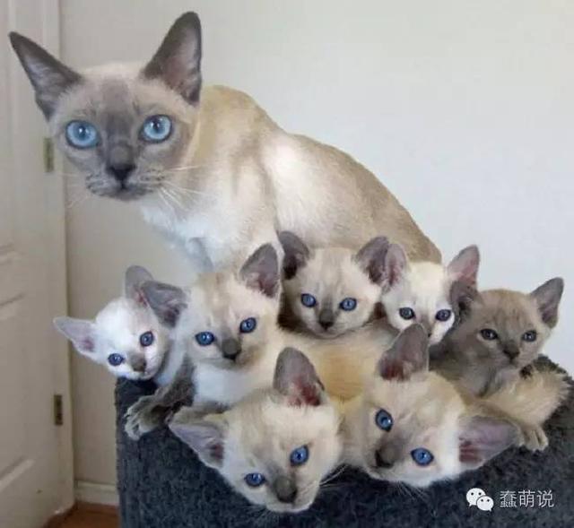 当妈妈真的是一件辛苦事!看这些喵星人的表情就知道了-蠢萌说