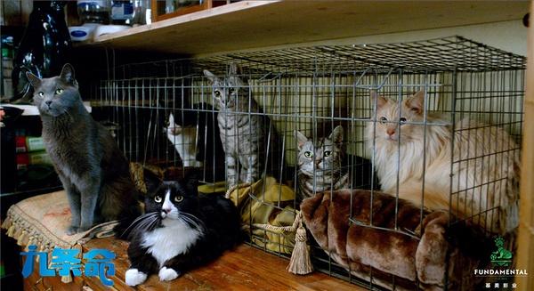 《九条命》:猫的童话