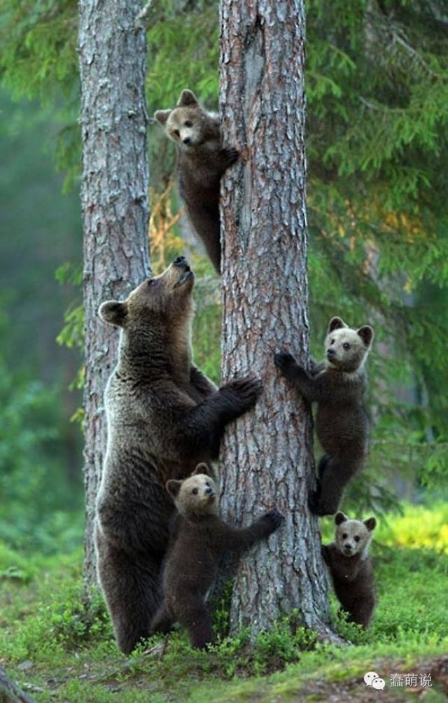 看这些动物们一大家子的全家福,真是要把人萌化!-蠢萌说