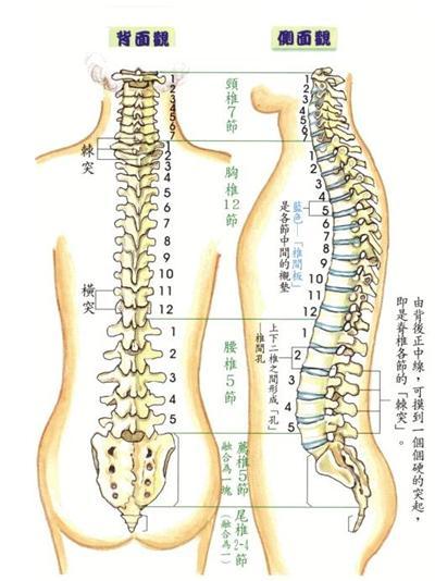 胸椎和腰椎疼痛的原理_腰椎和胸椎分界图