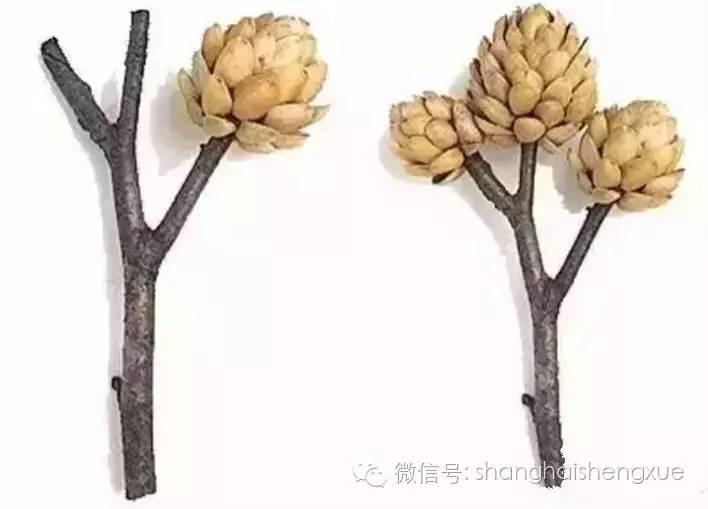 树枝头饰手工制作