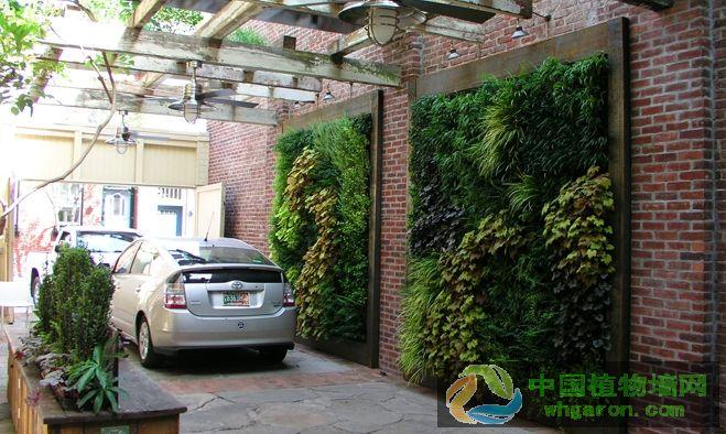 王恢文浅谈植物墙植物选择与养护