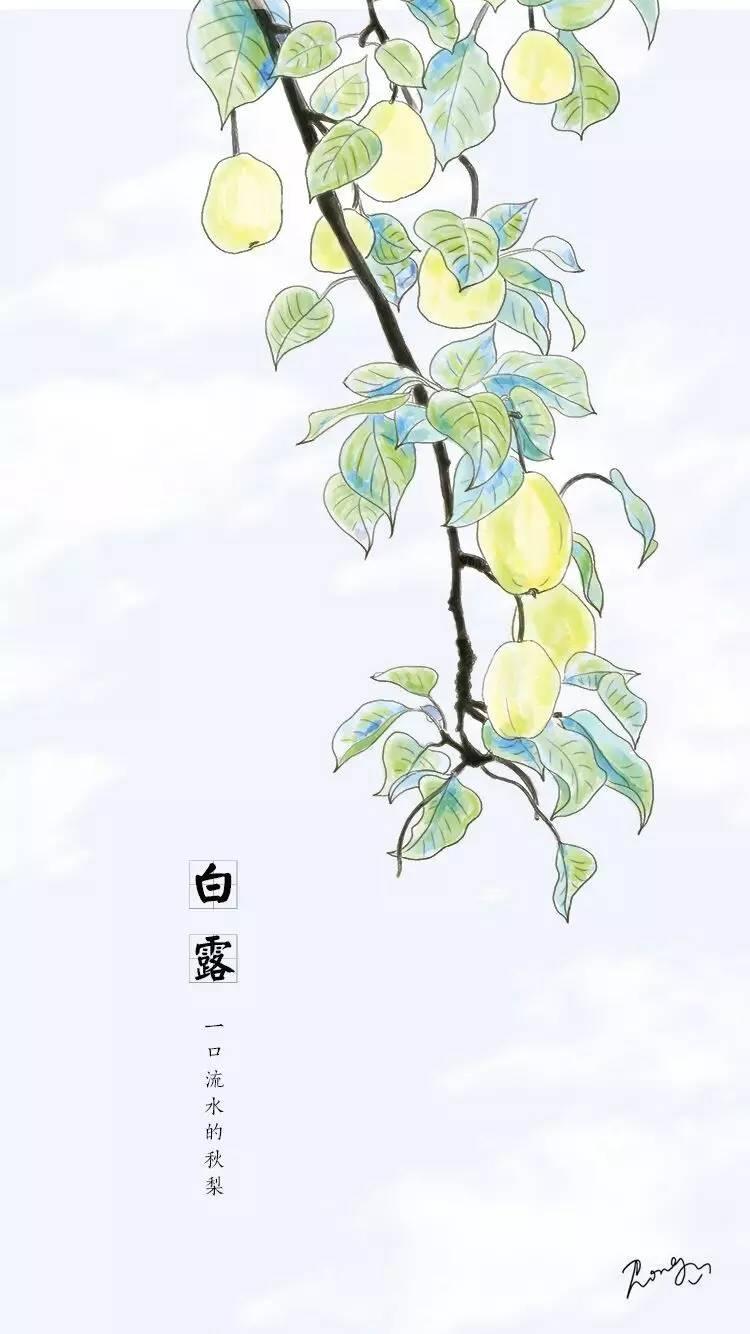 白露节气动画手绘