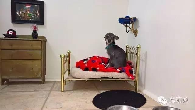 又见人不如狗!主人为狗狗精心打造迷你豪华公寓-蠢萌说