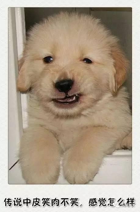 每日一蠢萌:什么是狗带?这才是真正的狗带!-蠢萌说