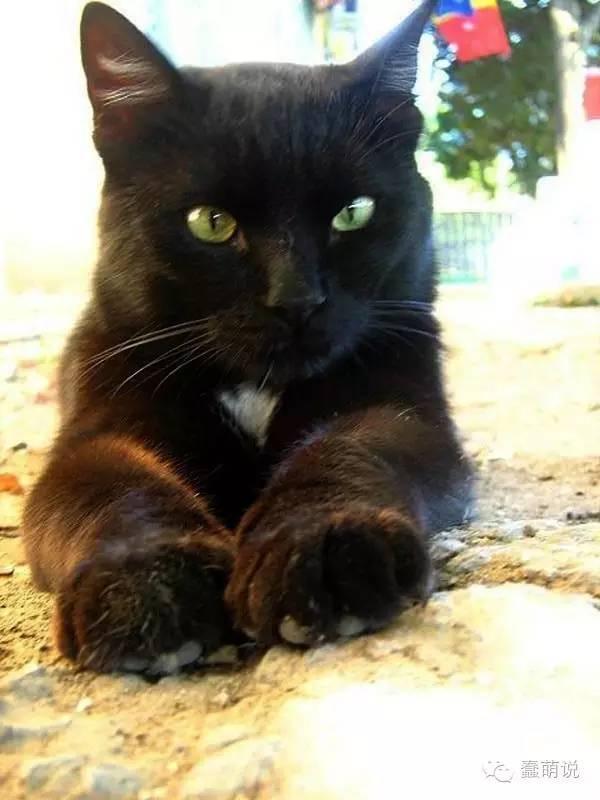 小奶猫藏身吸血鬼城堡躲避恶犬,却意收获铲屎官!-蠢萌说