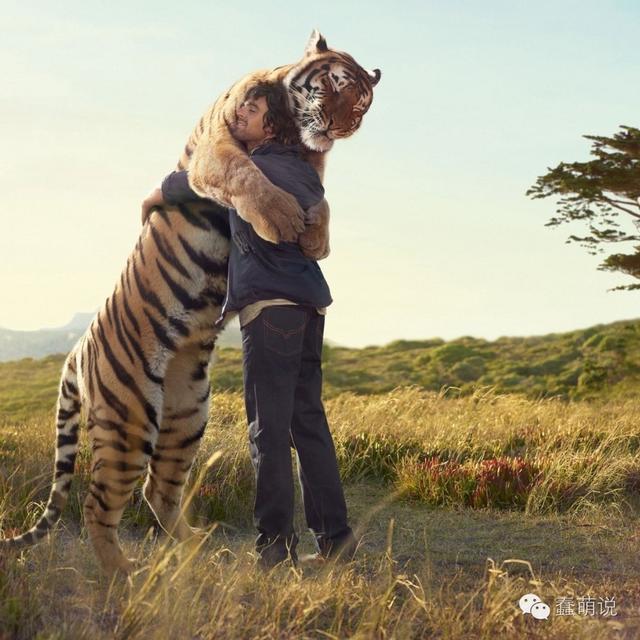 好奇向,为什么只有巨型犬没有像狮子老虎体型的巨猫咪?-蠢萌说