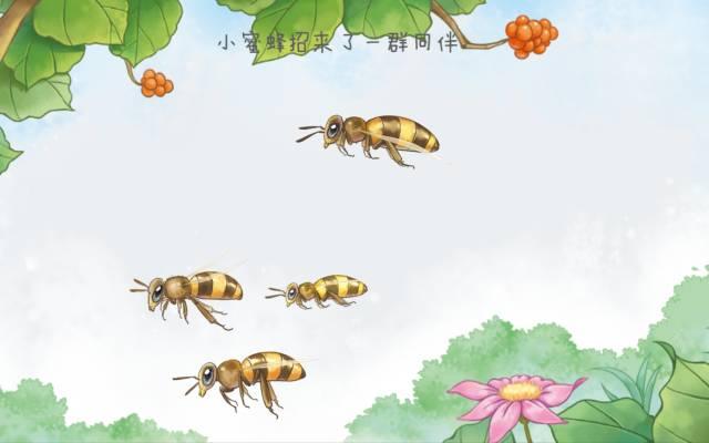 一只勤劳的小蜜蜂带你走进神奇的蜜蜂王国图片