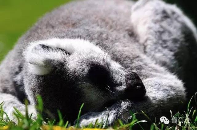 真羡慕这些能把睡觉当成一种生活方式的可爱动物们!-蠢萌说