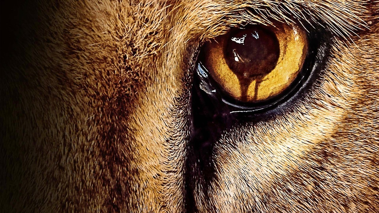 如果动物忽然智力觉醒,拥有了人类的智能水平