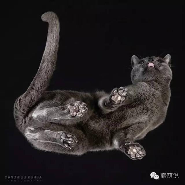 透过猫爪看猫咪是一种怎样的画风?-蠢萌说