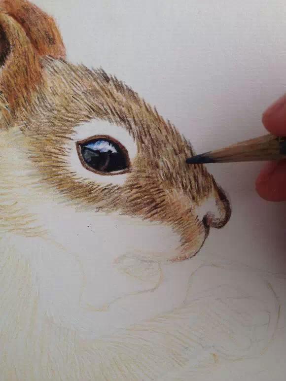 彩铅手绘萌宠动物教程