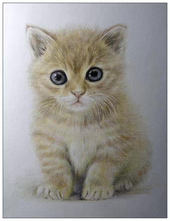 彩铅手绘猫眼睛图片