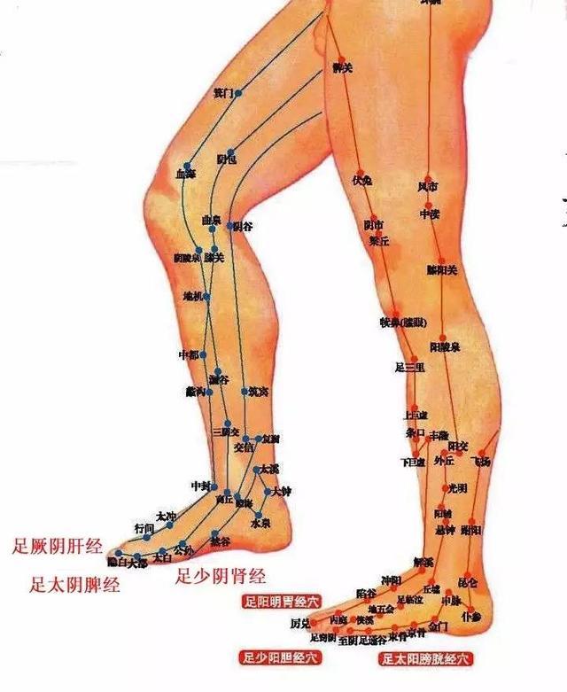 腿部6条经络图解大图-这才是痛经的正确解决方式 别只知道喝热水啦