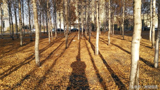 我欣赏秋天落叶的色彩斑澜