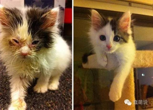 这些猫咪告诉我们:铲屎官才是世界上最善良的人!-蠢萌说