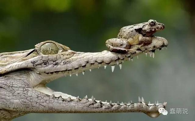 这些动物告诉我们:块头大并不一定就可怕!-蠢萌说