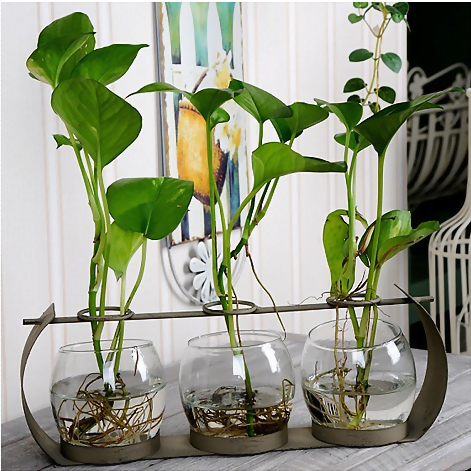 房产 正文  如果用废弃的玻璃瓶,用来diy花瓶是不是会为你的家居装饰图片